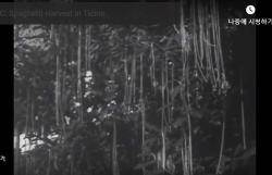 나무에서 스파게티가 자라난다고?…기상천외 뉴스