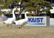 [서소문 사진관] 카이스트에는 20년 터줏대감 거위 가족이 산다!