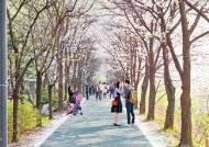 [라이프 트렌드] 이번 주말 양재천 오세요 … 오감 만족하는 다채로운 행사 풍성