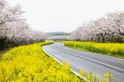 막 찍어도 인생 사진… 지금 가장 예쁜 제주도 봄 여행지5