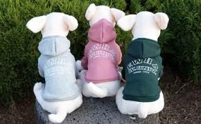 강아지옷 파는 이대, 참기름 파는 고대… 대학 최고 굿즈 명소는?