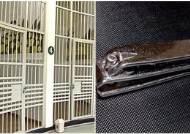 살인범은 왜 경찰서 유치장서 손톱깎이를 삼켰나