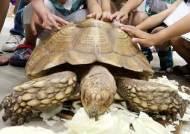 """동물원 중 절반이 '실내동물원'…""""한국의 동물 도와달라"""" BBC에 편지 보낸 10대"""