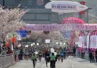 경주 벚꽃마라톤 하프코스 참가한 20대 중국인 숨져