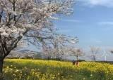 10km가 연노랑·연분홍…한국 아름다운길 제주 녹산로 북적