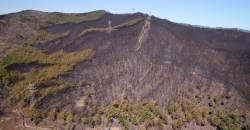 갈수록 위험해지는 봄철 산불…건조한 날씨와 강풍, 온난화 탓