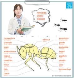 [소년중앙] 세계 최초 농사꾼, 효율적 분업…알수록 대단한 개미