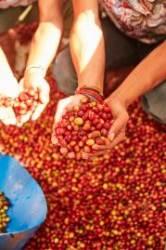 1박스에 4500만원…세계는 지금 스페셜티 커피 열풍
