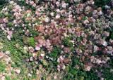 [서소문사진관] 하늘에서 4월의 봄을 내려다봄!