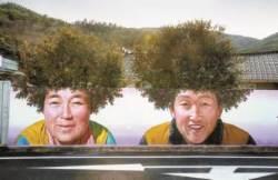 [한 컷] 파마머리가 된 동백나무