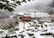 봄·여름·가을·겨울이 하루에?…봄꽃에 호우·강풍·대설 예고