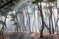 산불·병충해·오염…'국목(國木)' 소나무의 소리없는 비명