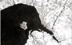 [조용철의 마음 풍경] 꽃놀이