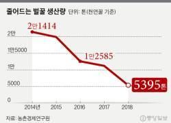 한국 꿀이 사라진다…천연꿀 생산량 5년만에 75%↓