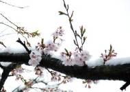 벚꽃 개화 예보 100% 적중! 민간 기상업체의 눈부신 약진