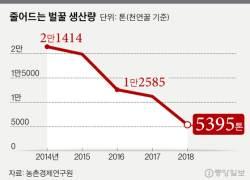 이상기후로 벌 떼죽음…천연꿀 생산 4년새 75% <!HS>감소<!HE>