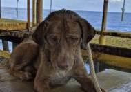 [서소문사진관]해안서 220km 떨어진 망망대해 떠돌다 극적 구조된 강아지 '생존자'