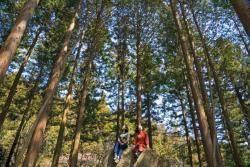 편백숲에 누울까 비자림에 앉을까… 초록의 유혹
