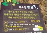 """'마약 양성 반응' 박유천 벚꽃길, 28일 흔적 지운다…""""팬클럽 측도 알아"""""""