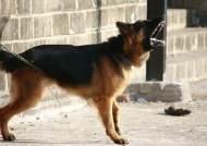 자동차 쫓아다니는 개는 강한 공격성, 어린이들 조심해야