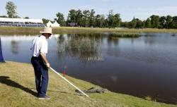 """""""조심해, 뒤에 악어가..."""" PGA 취리히 클래식의 독특한 풍경"""