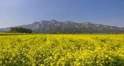 [권혁재 핸드폰사진관] 남도의 봄