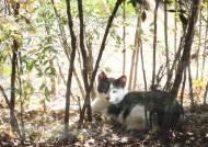 """""""길냥이 200만마리 살처분""""…호주, 고양이 잡기 혈안된 까닭"""