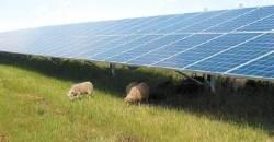 [기업이 힘이다!] 세계 최고 위상 태양광 사업 분야 경영 효율화 박차