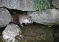 천연기념물 수달, 멸종위기 삵·담비 어울려 사는 이곳