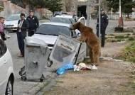 """백주대낮 민가에 나타난 곰…""""쓰레기통 뒤져 식사"""""""