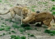 [김도년의 썸타는 경제]10억이면 동물원 동물 다 살 수 있다?
