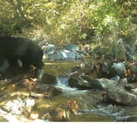 [<!HS>뉴스A/S<!HE>]DMZ 반달곰 생존 미스터리…지뢰 냄새로 피한다?