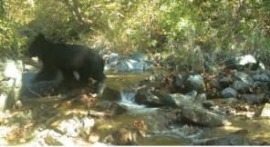 [뉴스A/S]DMZ 반달곰 생존 미스터리…지뢰 냄새로 피한다?