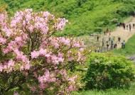 단양소백산철쭉제, 연분홍 가득한 봄날의 소백산으로