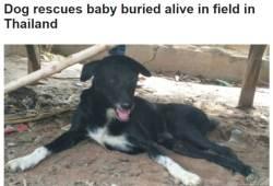 태어나자마자 생매장된 아기…개 덕분에 무사히 구조
