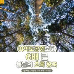 [<!HS>카드뉴스<!HE>] 여의도공원보다 6배 큰 봄날의 초록 왕국