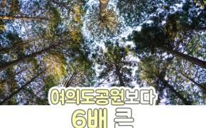 [카드뉴스] 여의도공원보다 6배 큰 봄날의 초록 왕국