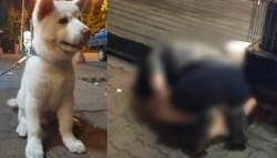 """'수간' 당한 강아지 근황…""""침 흘리고 배변 못해"""""""