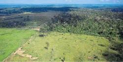 아마존 열대우림 파괴 급속도…5월에만 축구장 7000개 면적 사라졌다