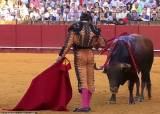 500년 역사 스페인 투우 막았다…지금 유럽선 '동물당' 돌풍