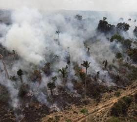 미국-중국 무역전쟁이 아마존 열대우림을 파괴한다
