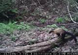 국립공원 생태통로를 가장 많이 이용하는 단골 야생동물은?