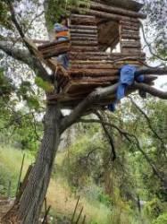 [서소문사진관] 나무 위 전망 좋은 집, 주인은 강도 용의자