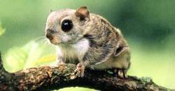 지리산 사는 '아기 하늘다람쥐' 날아서 부산까지?…숨은 사연은