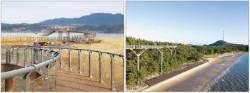 [도약하는 충청] 서천군, 드넓은 해송숲·철새낙원·갈대밭 …'스카이워크'서 만끽하는 절경