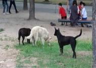 인천대공원에 나타난 들개들…시민·반려견 공격받아