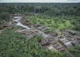 [강찬수의 에코파일] 미·중 무역전쟁이 아마존 열대우림을 <!HS>파괴<!HE>한다