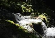 한강·낙동강 발원지에서 청정지역에서 사는 미기록 돌말 9종 발견