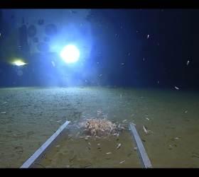수심 11㎞ 마리아나 해구…수압은 점보 제트기 50대 무게