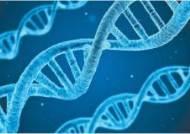 IBS, 자손에 유전자 전하는 '염색체 복제' 핵심 원리 밝혀